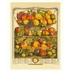 Twelve Months of Fruits:  September 1732  - #XKFL6021  -  PRINT
