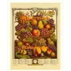 Twelve Months of Fruits:  October 1732  - #XKFL6022  -  PRINT
