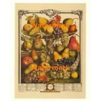 Twelve Months of Fruits:  November 1732  - #XKFL6023  -  PRINT