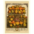 Twelve Months of Fruits:  December 1732  - #XKFL6024  -  PRINT