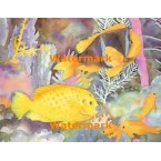 Tropical Fish With Goldfish  - #XKL6450  -  PRINT
