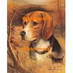 Beagle  - #XAR6261  -  PRINT
