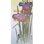Orchid Oriental  - #XKG1889  -  PRINT