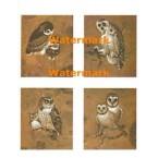 Owls  - XBAN336  -  PRINT 4 Designs