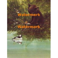 Bear, Butterfly, Bufflehead Duck, & Chickadee  - XBAN834  -  PRINT