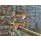 Bluebirds on Fence  - XBBI-796  -  PRINT