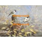 Birds on Fence  - XBBI-799  -  PRINT