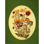 Pressed Flowers  - XBFL1029  -  PRINT