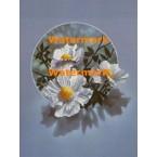 Flowers  - XBFL1893  -  PRINT