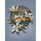 Flowers  - XBFL1894  -  PRINT