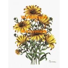 Flowers  - XBFL598  -  PRINT