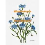 Blue Flowers  - XBFL600  -  PRINT
