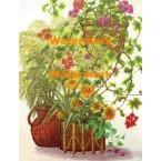 Plants  - XBFL920  -  PRINT