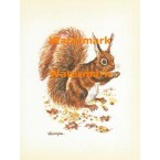 Squirrel at Autumn  - XS1010  -  PRINT