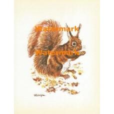 Squirrel at Autumn  - XS1010  -  PRINT