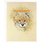 Wildlife  - XS2782  -  PRINT