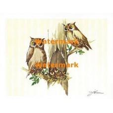Owl Family  - XS286  -  PRINT
