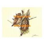 Owl Family  - XS288  -  PRINT