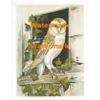Owl at Window  - XS3673  -  PRINT