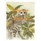 Owl on Branch  - XS3675  -  PRINT