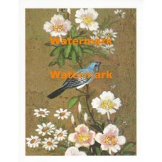 Bird & Blossoms  - XS5331  -  PRINT