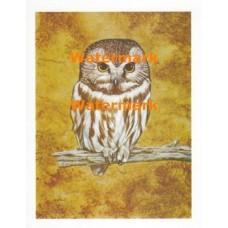 Owl  - XS5373  -  PRINT