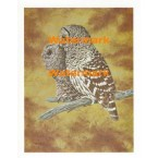 Owls  - XS5375  -  PRINT
