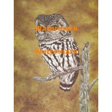 Owl  - XS5376  -  PRINT