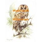 Tawny Owl  - XS5425  -  PRINT