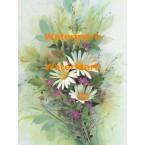 Daisies  - #XS6450  -  PRINT