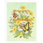 Butterflies & Daisies  - XS724  -  PRINT