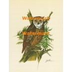 Owl  - XS819  -  PRINT