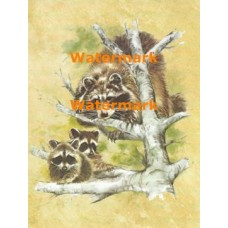 Raccoon Family  - XS8540  -  PRINT