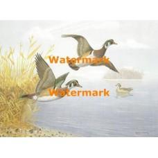 Wood Ducks  - XS9157  -  PRINT