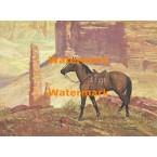 Quarterhorse  - #XBSP368  -  PRINT