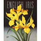 English Iris  - #XKFL7027  -  PRINT