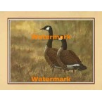 Canadian Geese  - #XKFL7178  -  PRINT
