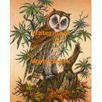 Barn Owl  - #XKA8621  -  PRINT