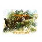 Leopard  - #XKL8141  -  PRINT
