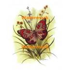 1.  Butterfly  - #XKL8177  -  PRINT