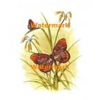 1.  Butterfly  - #XKL8178  -  PRINT