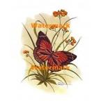 1.  Butterfly  - #XKL8180  -  PRINT