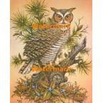 Horned Owl  - #XKL8623  -  PRINT