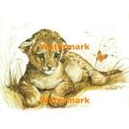 Baby Lion  - #XKH8881  -  PRINT