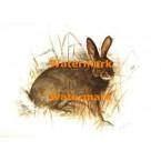 Rabbit  - XBAN685  -  PRINT