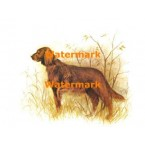 Golden Retriever  - XBAN755  -  PRINT
