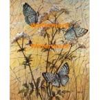 Butterflies  - XBBF61  -  PRINT