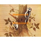 Woodpeckers  - XBBI-233  -  PRINT