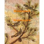 Myrtle Warbler  - #XBBI-302  -  PRINT