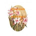 Lilies  - #XBFL1507  -  PRINT